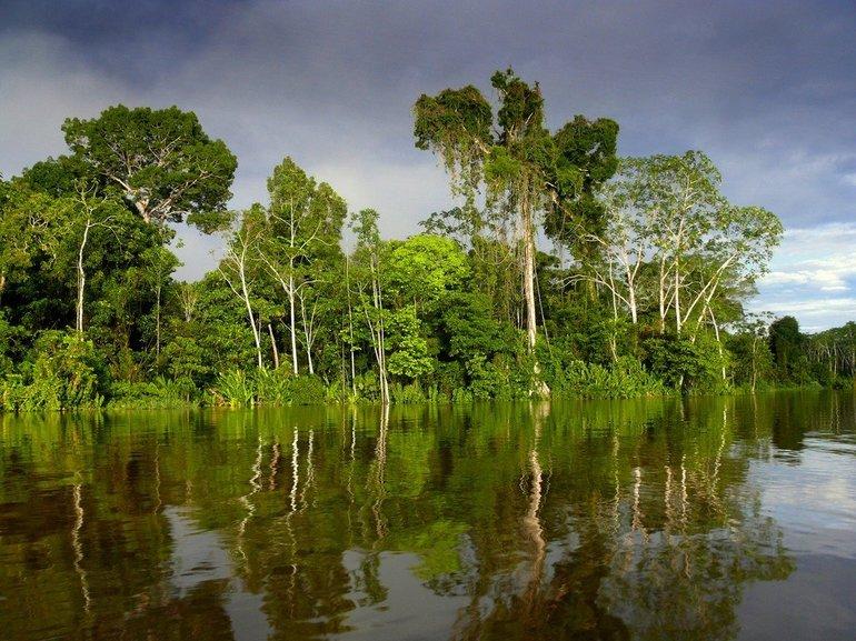Екологія Амазонки