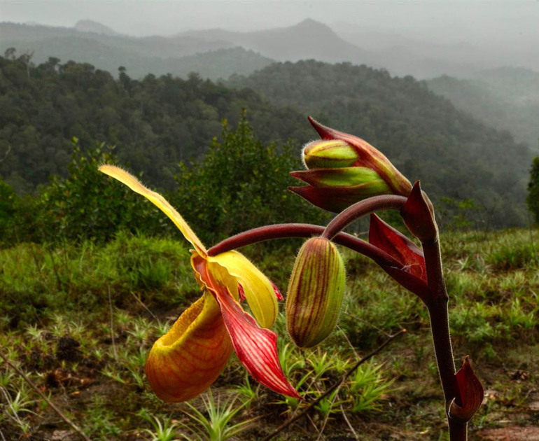 Флора Південної Америки