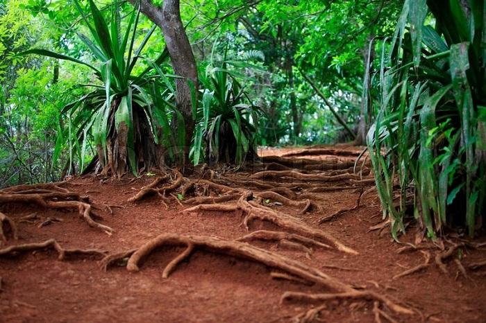 Ґрунти вологих екваторіальних лісів