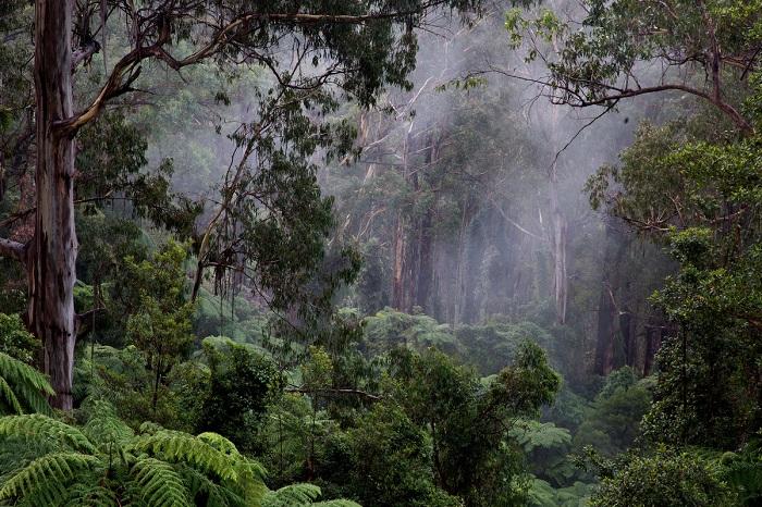 Клімат вологих екваторіальних лісів