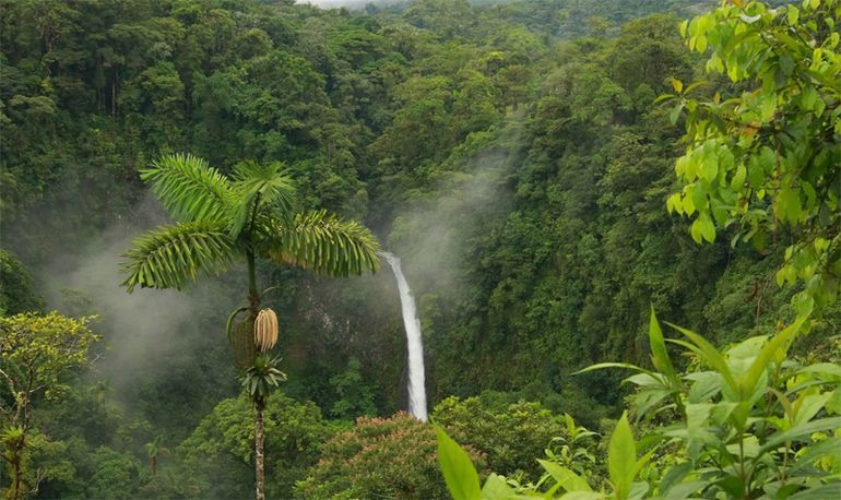 Ліси Південної Америки