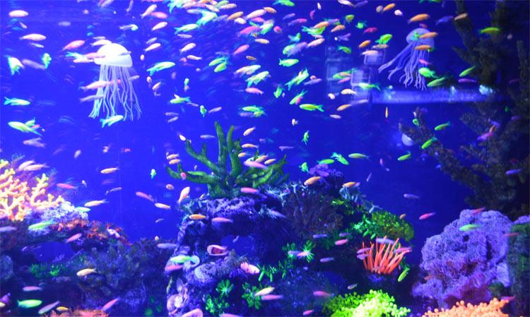 Підводний світ Індійського океану
