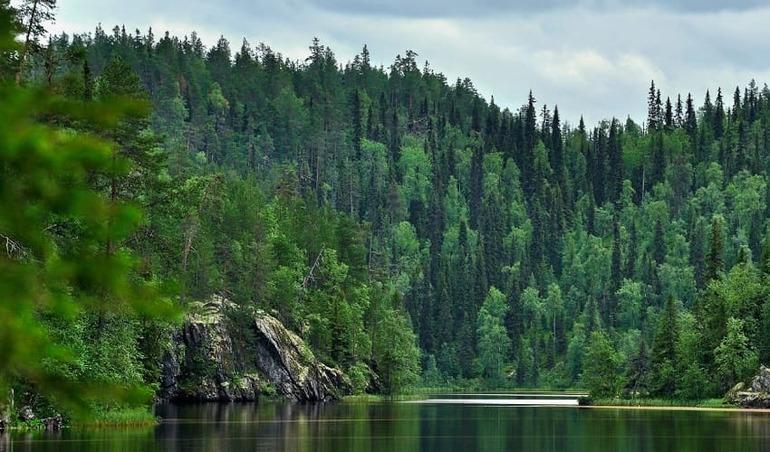 Північна Америка - ліси