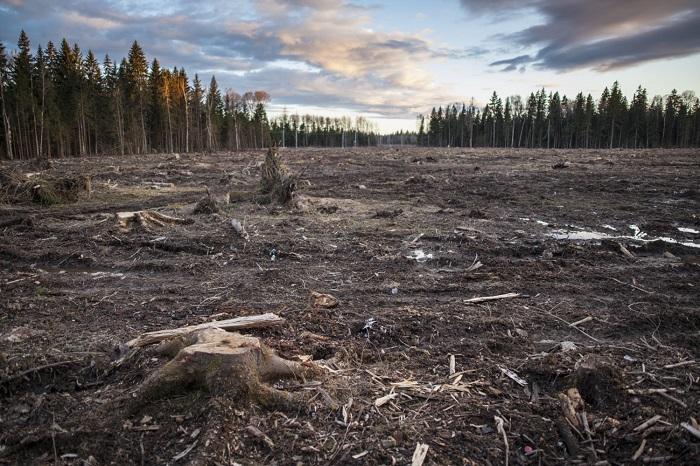 Проблеми лісової промисловості