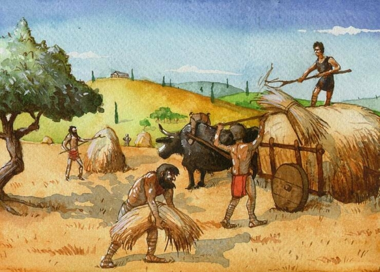 Раби на полях
