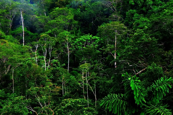 Рослинність вологих екваторіальних лісів