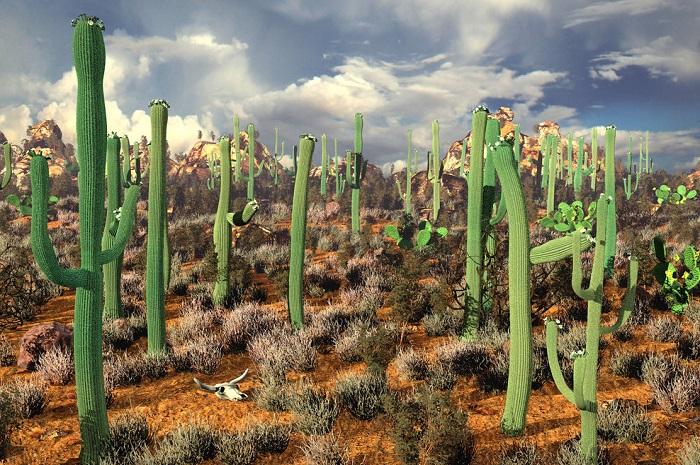 Рослини Мексики