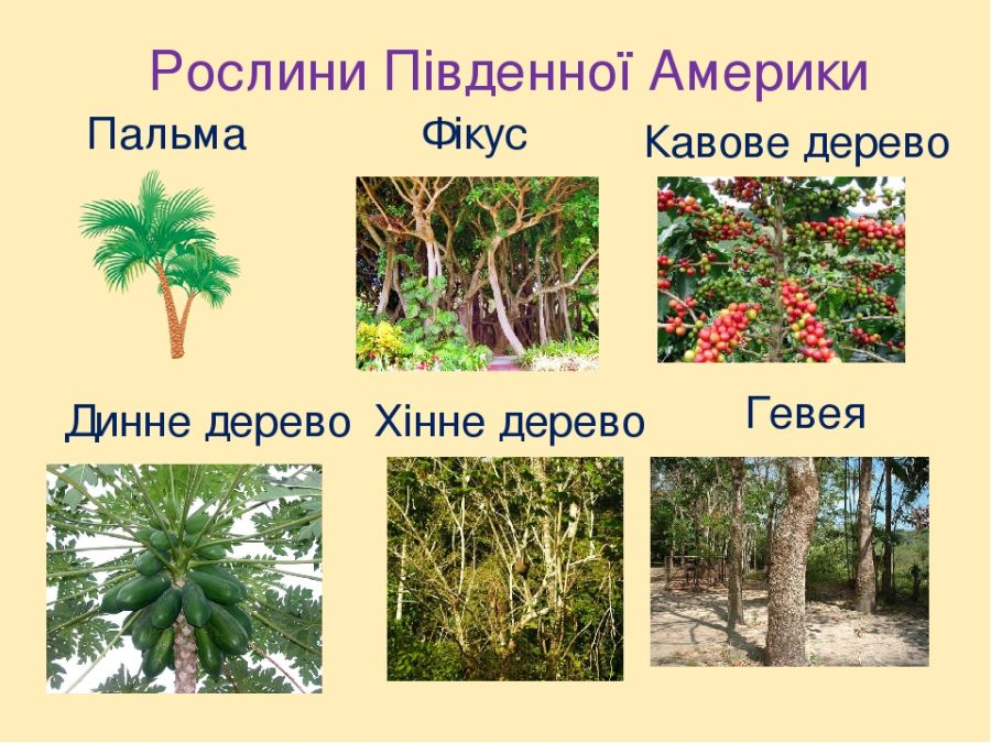 Рослини Південної Америки - приклади