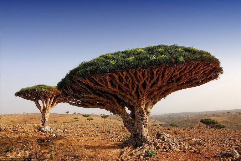 Рослини пустель