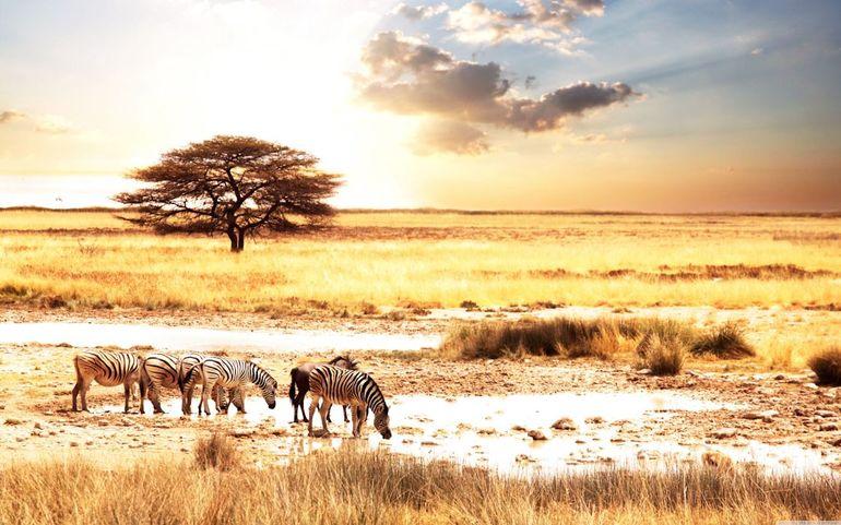 Савана - клімат