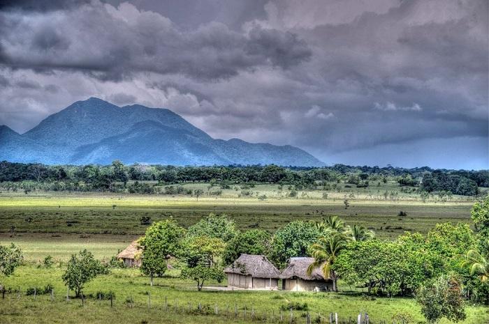 Савани Південної Америки