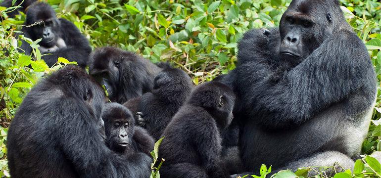 Тваринний світ Африки