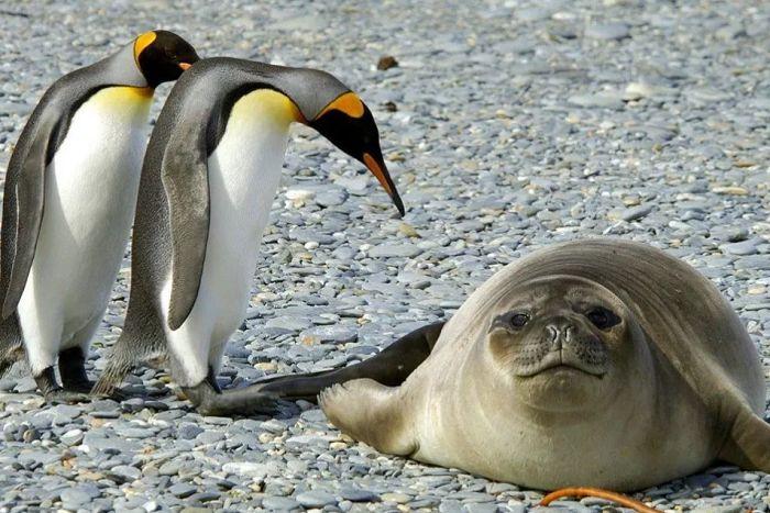 Тварини Антарктики