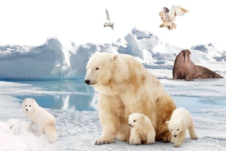 Тварини Арктики