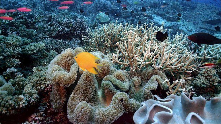 Тварини Індійського океану