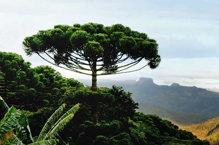 Вічнозелені ліси Південної Америки