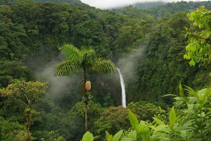 Вологі екваторіальні ліси Південної Америки