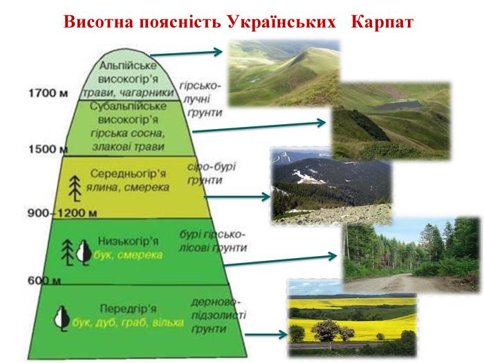 Висотна поясність Українських Карпат