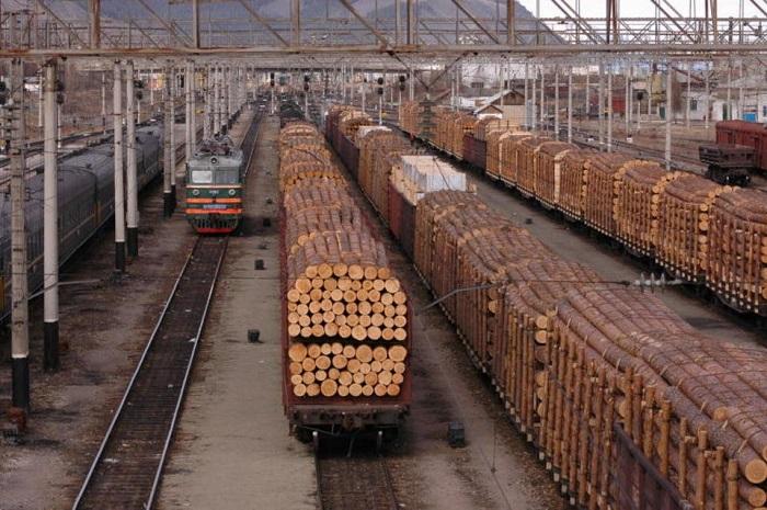 Значення лісової промисловості