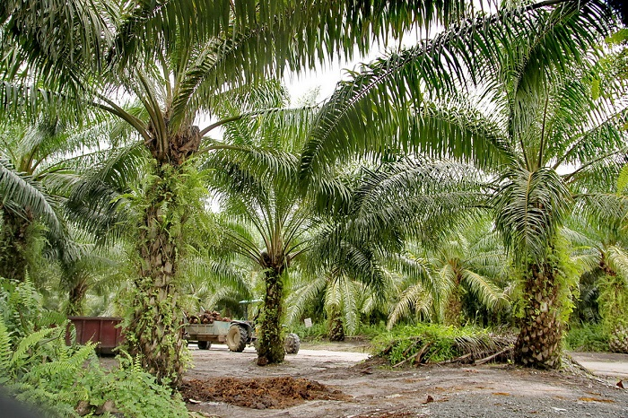 Значення вологих екваторіальних лісів