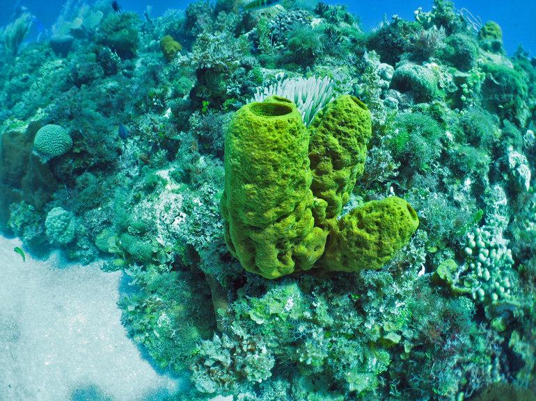Морська губка