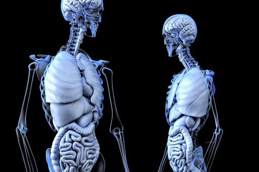 Анатомія
