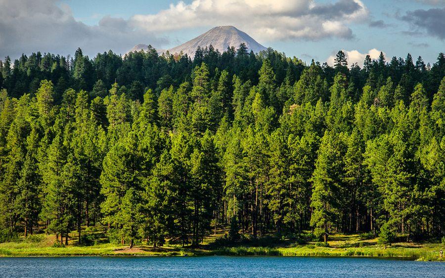 Біологічні ресурси Землі - ліси