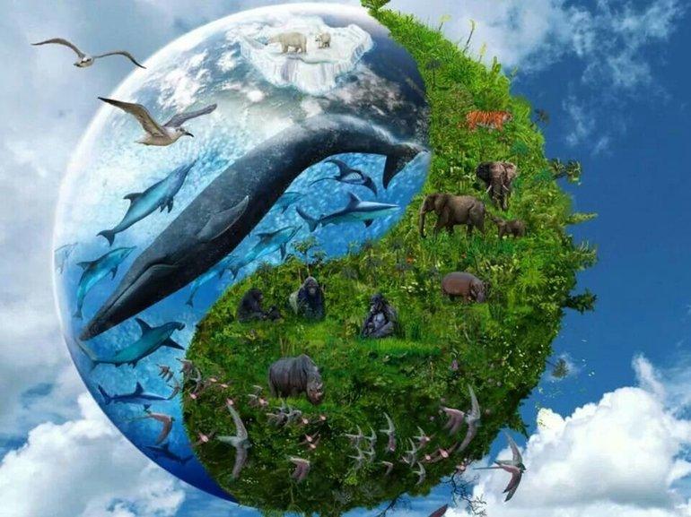 Біологічні ресурси Землі - малюнок