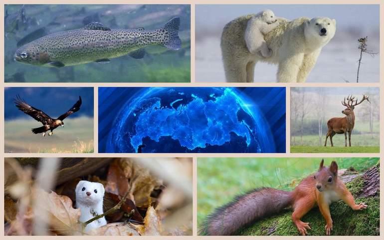 Біологічні ресурси Землі - тварини
