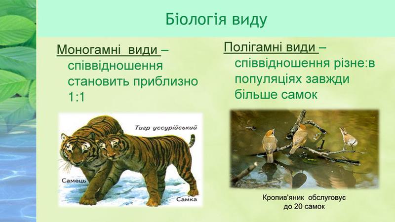 Біологія виду
