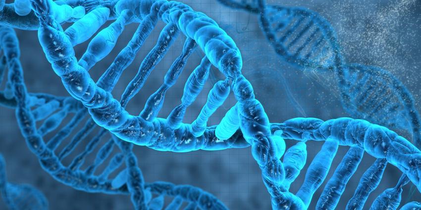 Будова людської ДНК