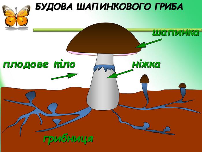 Будова шапинкового гриба