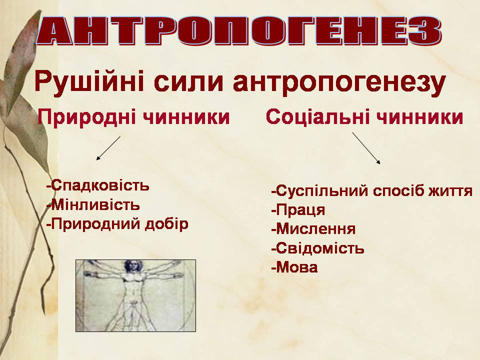 Чинники антропогенезу