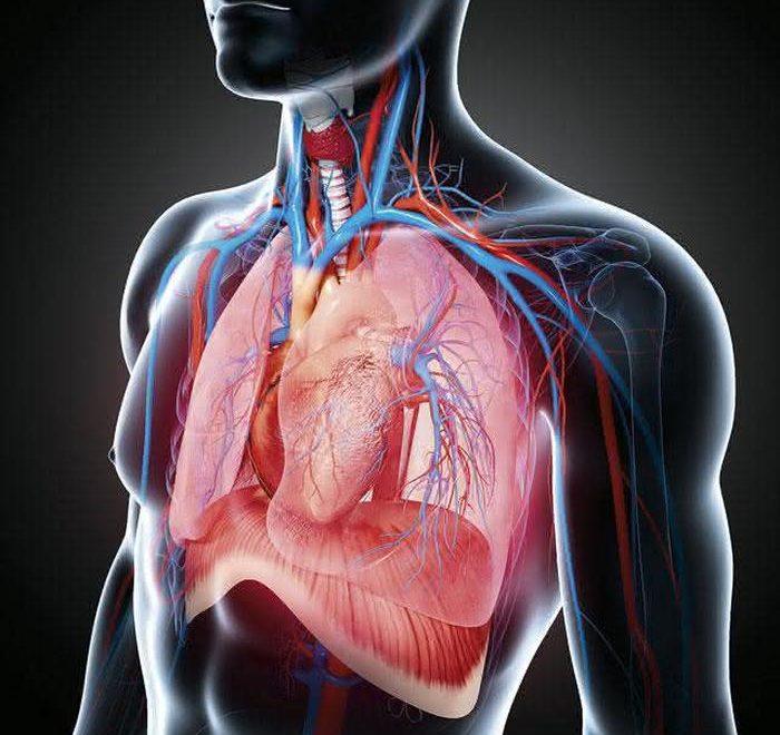 Дихальна система людини2