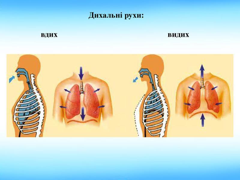 Дихальні рухи