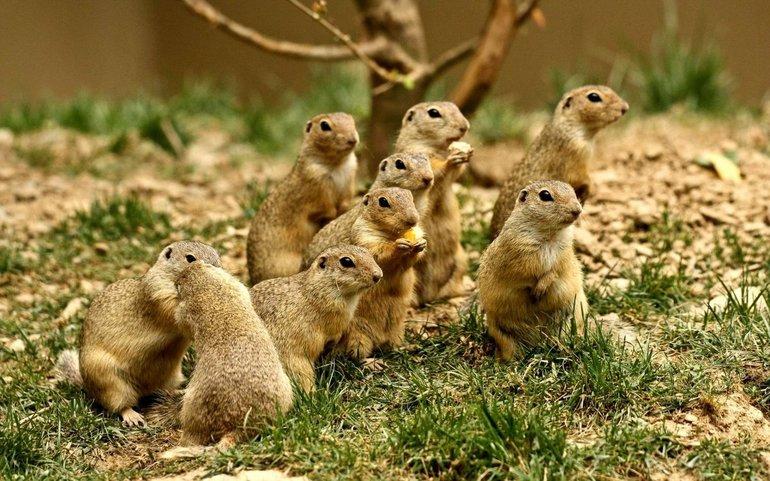 Екологічні групи ссавців