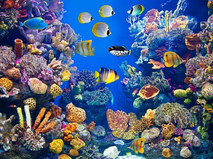 Екологічні види риб