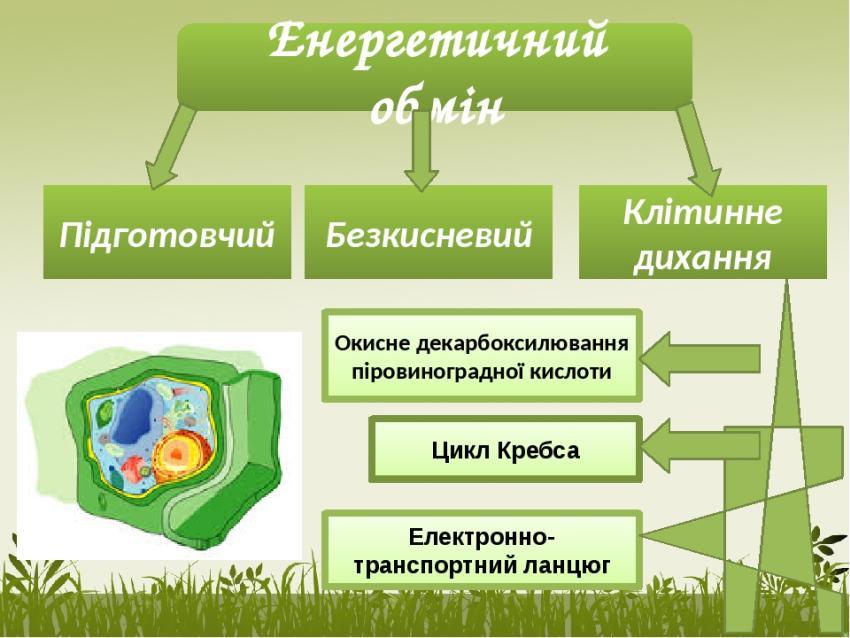 Енергетичний обмін - схема
