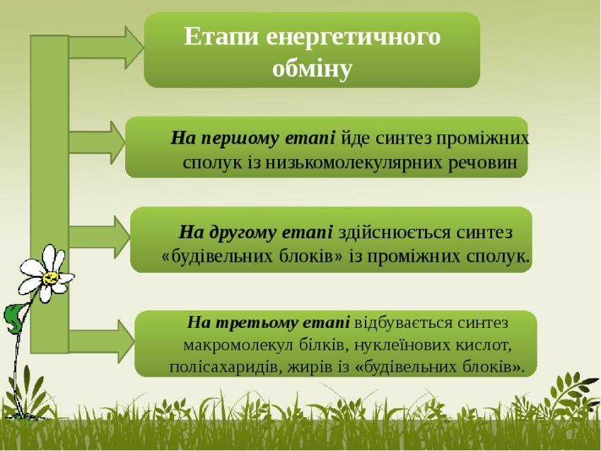 Етапи енергетичного обміну