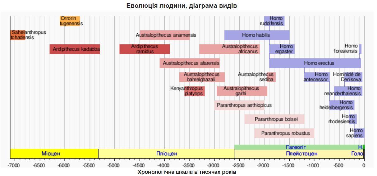 Еволюція людини - діаграма видів
