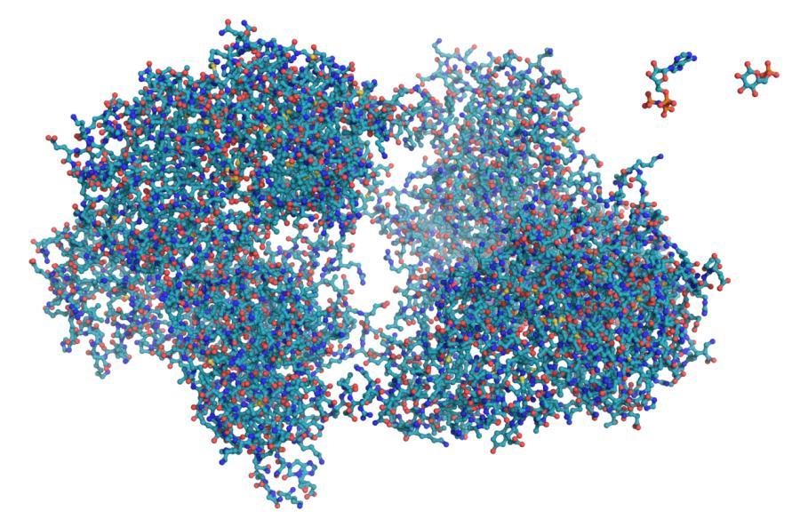 Фермент гексокіназа показаний за допомогою простої кульково-паличкової моделі.