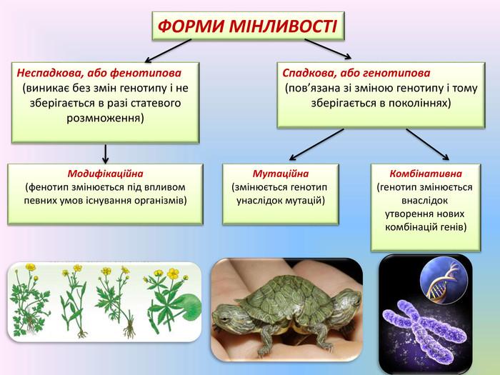 Форми мутаційної мінливості