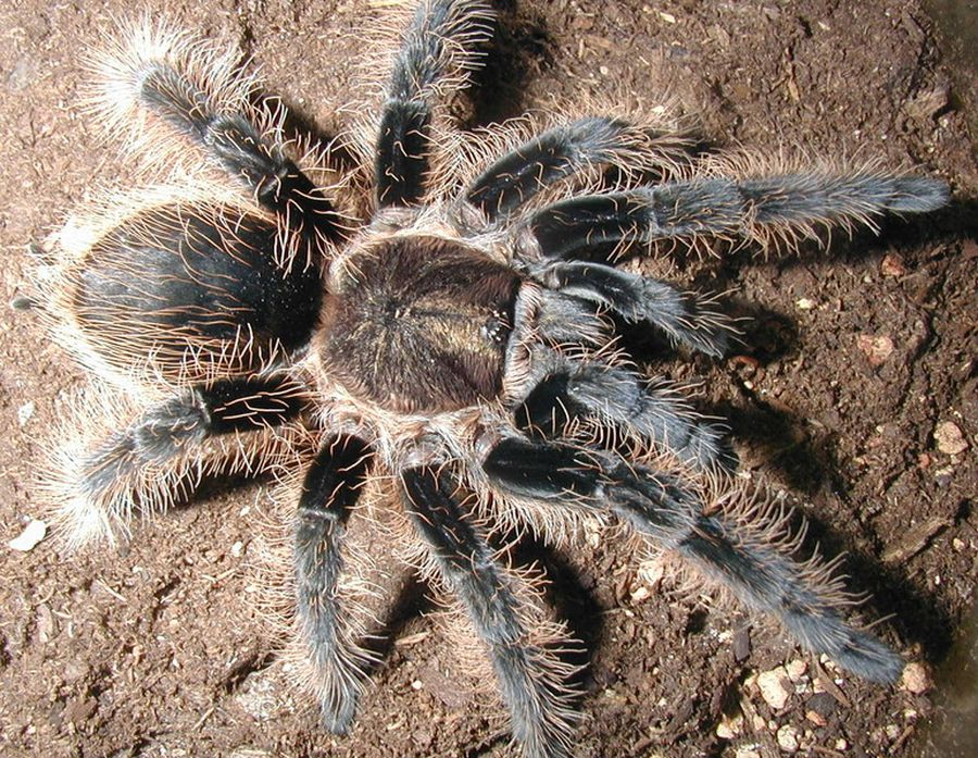 Фото павука