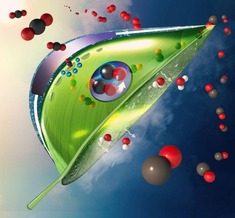 Фотосинтез - зображення