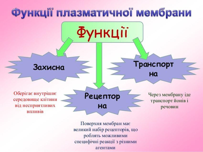 Функції клітинної мембрани