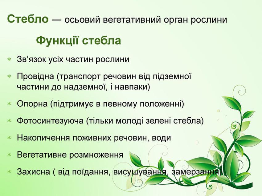 Функції стебла
