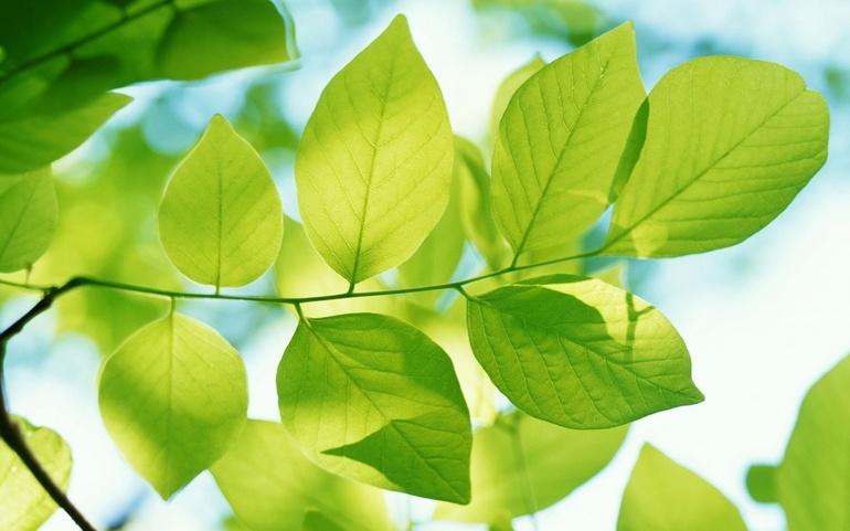 Газообмін рослин