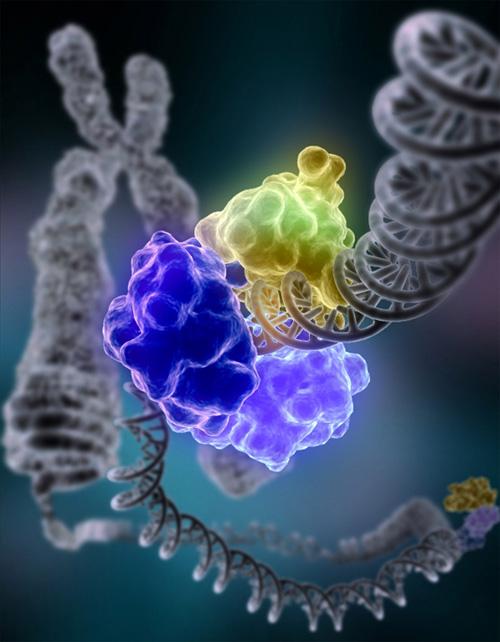 Генетика5