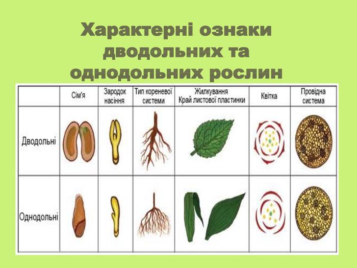 Характеристика однодольних і дводольних рослин