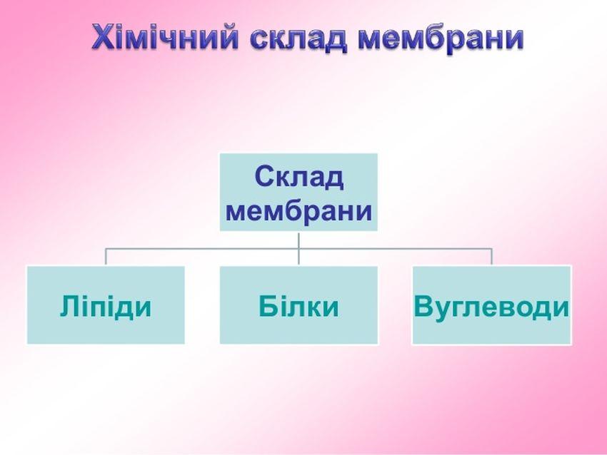 Хімічний склад мембрани